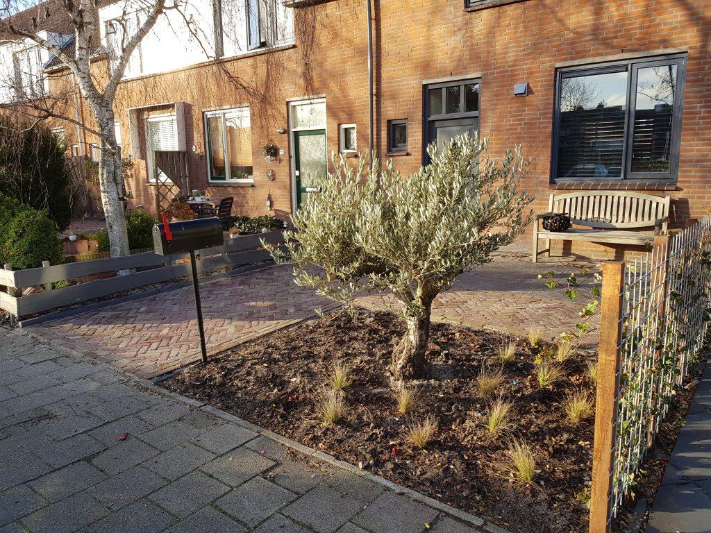 Stoere voortuin met olijfboom