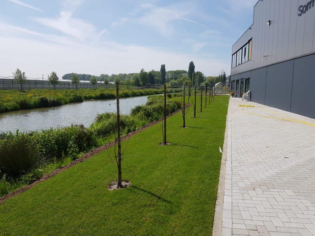 Realisatie strakke tuin rondom bedrijfspand